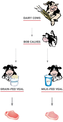 Veal production